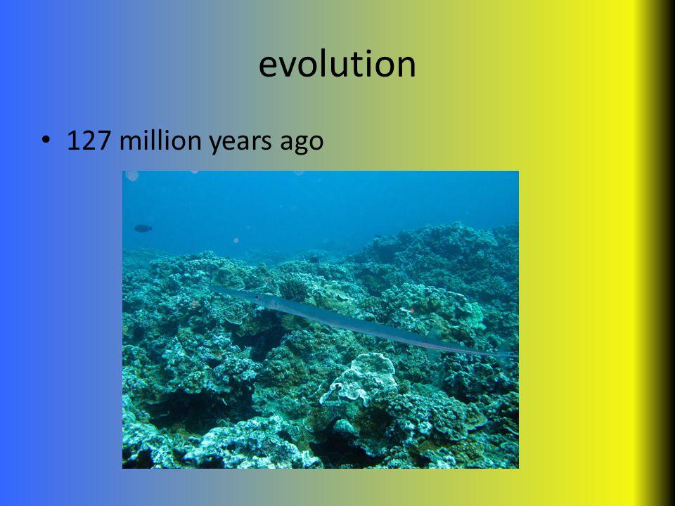 evolution 127 million years ago