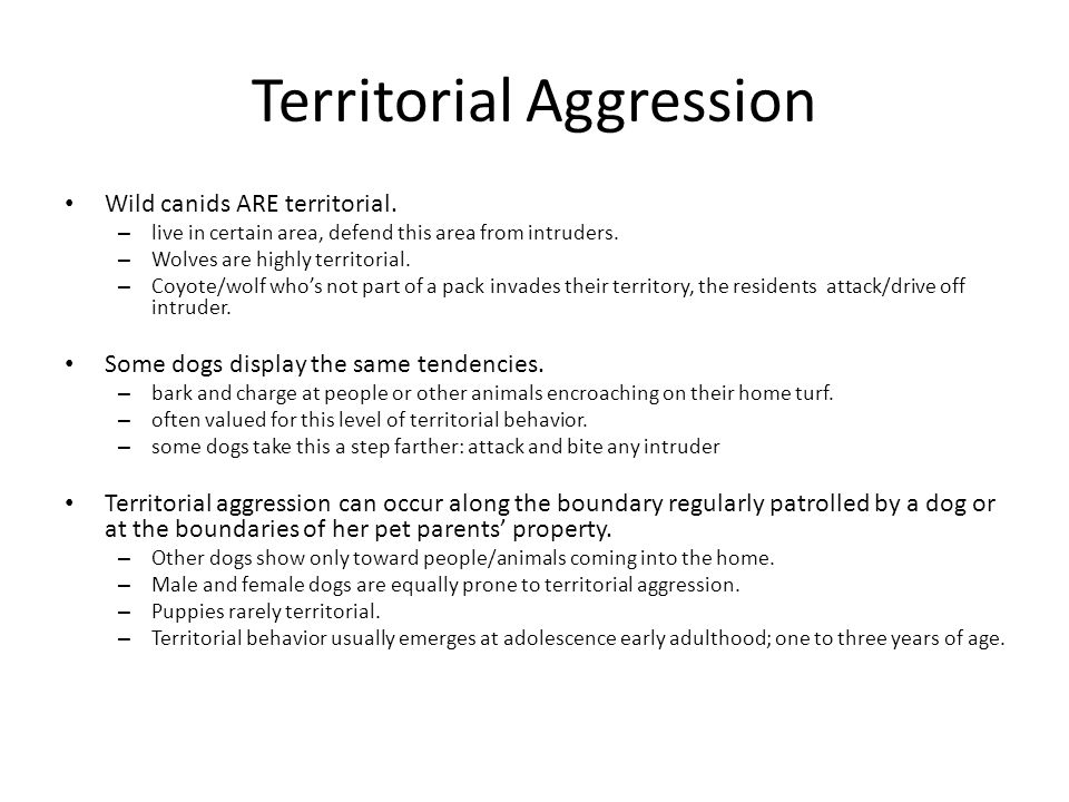 Territorial Aggression Wild canids ARE territorial. – live in certain area, defend this area from intruders. – Wolves are highly territorial. – Coyote