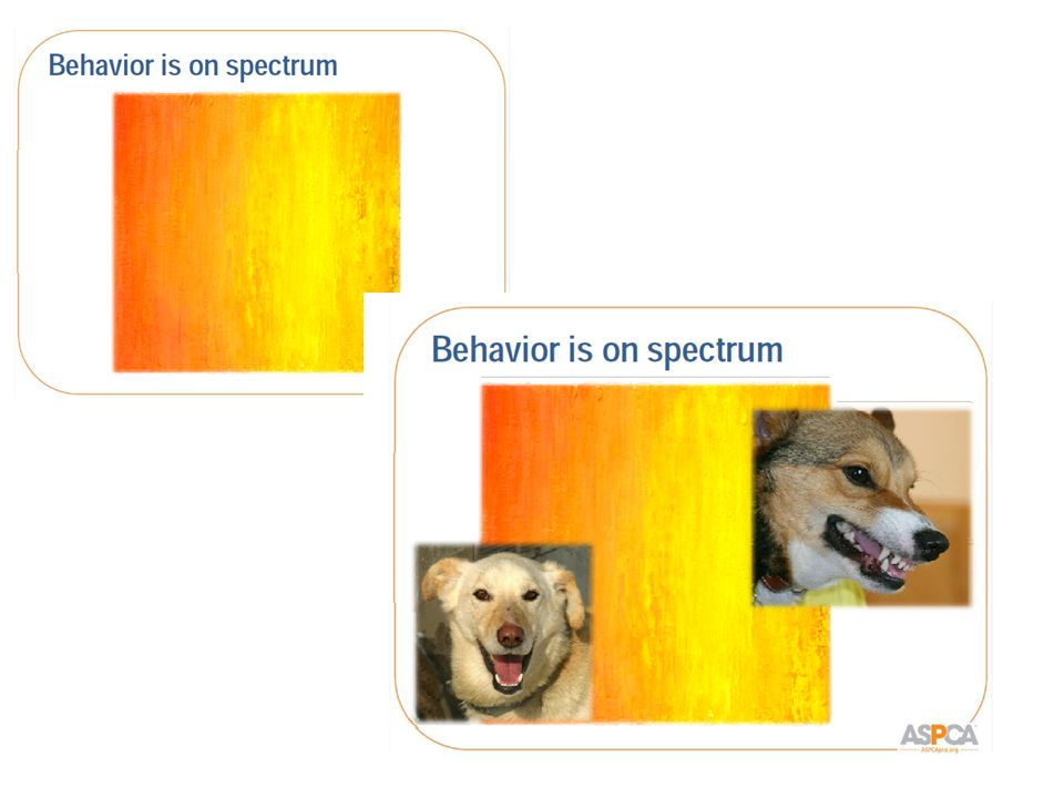 Protective Aggression Dogs = social species.