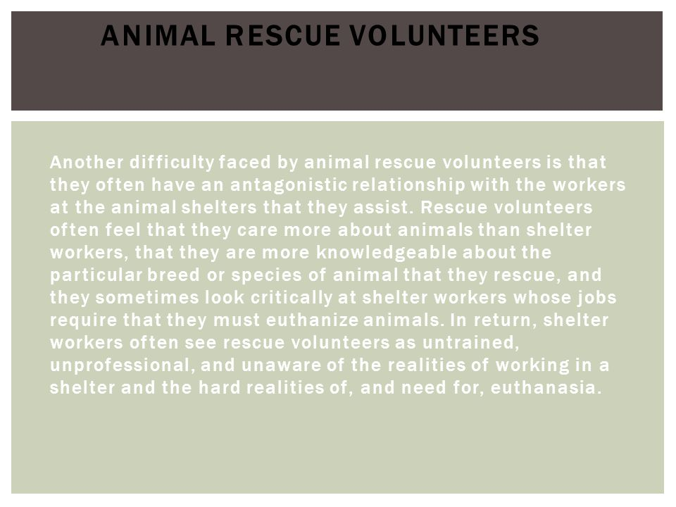 Another difficulty faced by animal rescue volunteers is that they often have an antagonistic relationship with the workers at the animal shelters that
