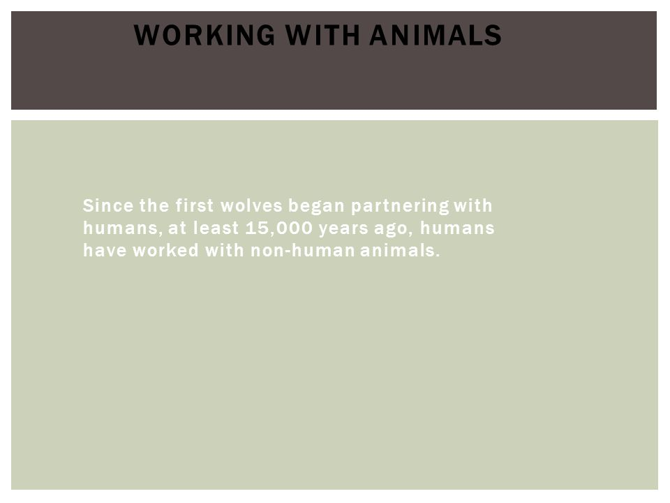 Since the first wolves began partnering with humans, at least 15,000 years ago, humans have worked with non-human animals. WORKING WITH ANIMALS