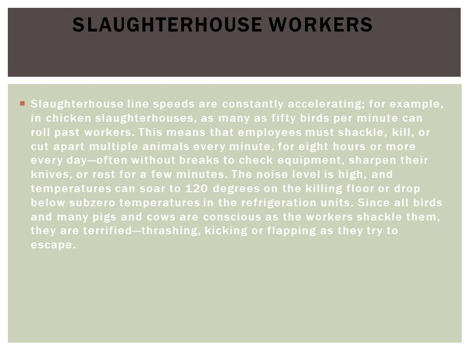  Slaughterhouse line speeds are constantly accelerating; for example, in chicken slaughterhouses, as many as fifty birds per minute can roll past wor