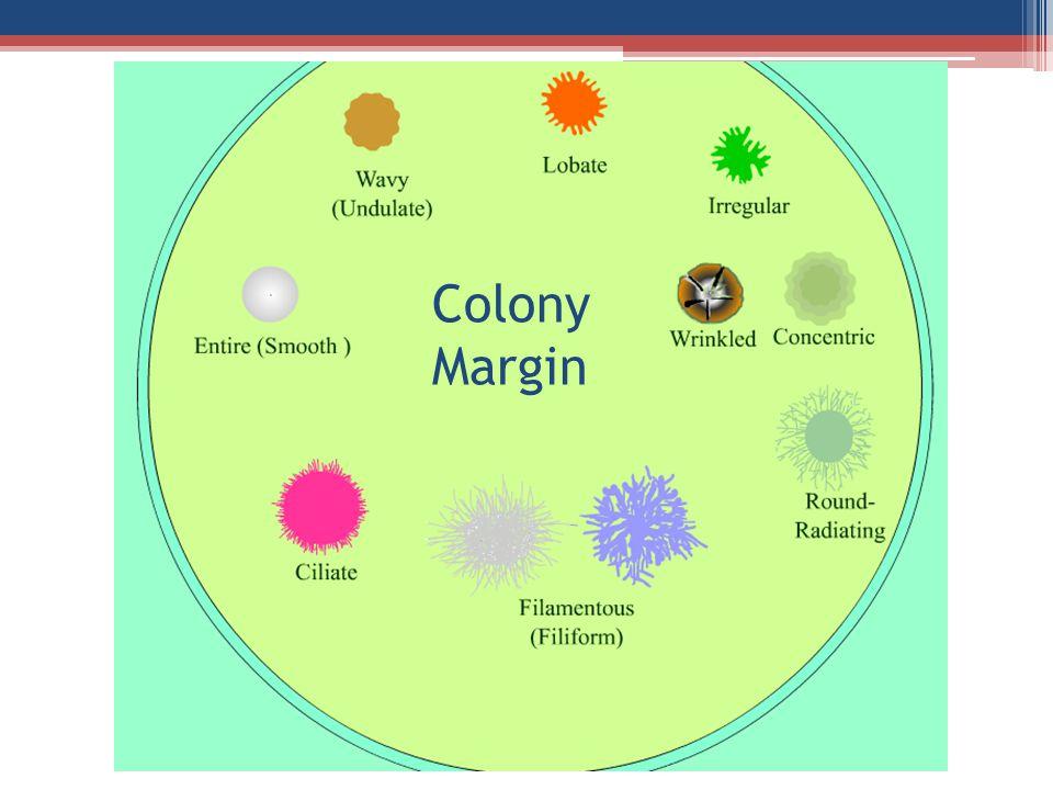 Colony Margin
