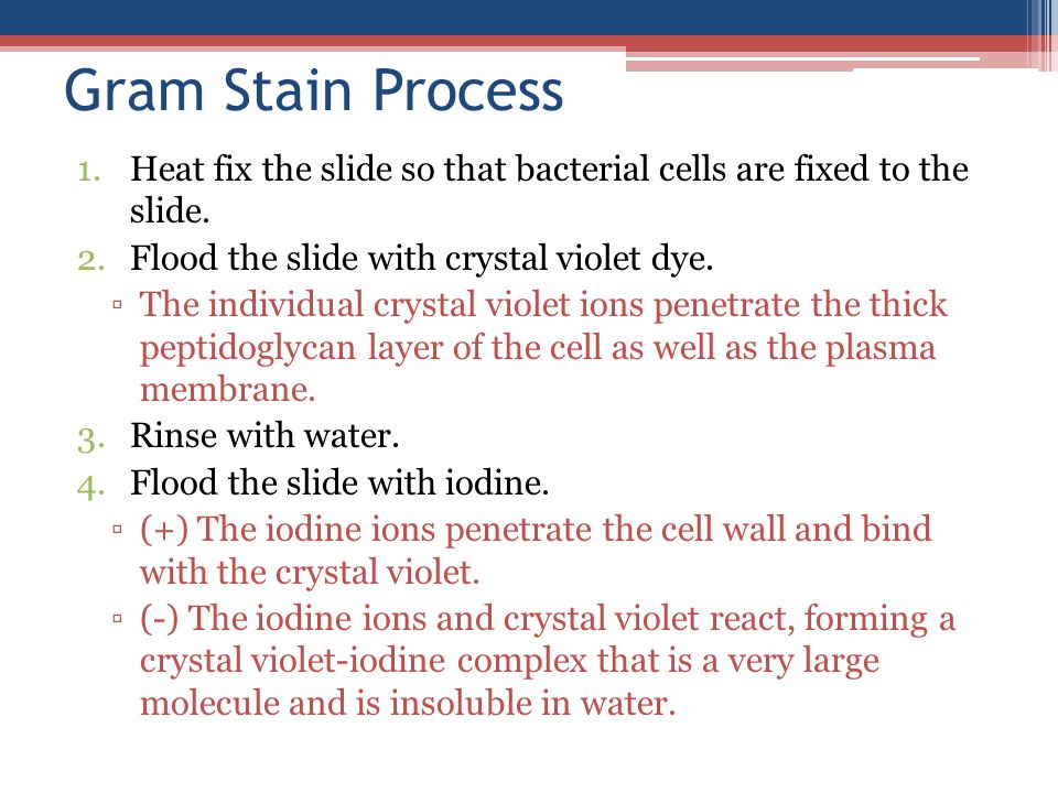Gram Stain Process 1.Heat fix the slide so that bacterial cells are fixed to the slide.