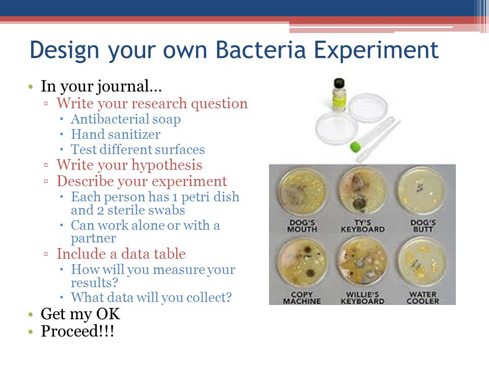 Design your own Bacteria Experiment In your journal… ▫Write your research question  Antibacterial soap  Hand sanitizer  Test different surfaces ▫Write your hypothesis ▫Describe your experiment  Each person has 1 petri dish and 2 sterile swabs  Can work alone or with a partner ▫Include a data table  How will you measure your results.