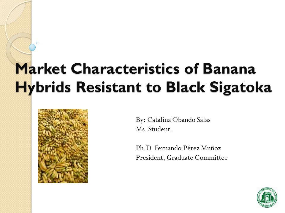 Market Characteristics of Banana Hybrids Resistant to Black Sigatoka By: Catalina Obando Salas Ms.
