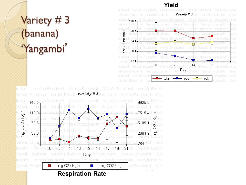 Variety # 3 (banana) 'Yangambi ' Yield Respiration Rate