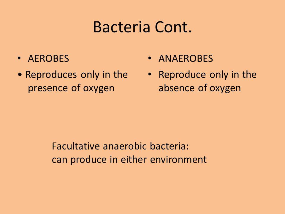 Bacteria Cont.