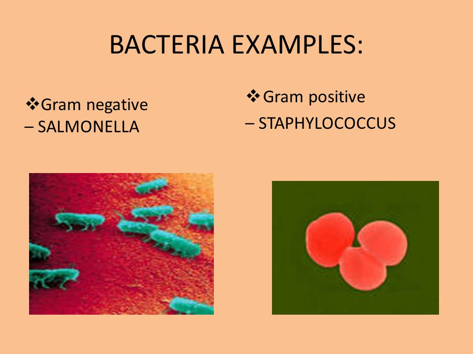 BACTERIA EXAMPLES:  Gram positive – STAPHYLOCOCCUS  Gram negative – SALMONELLA
