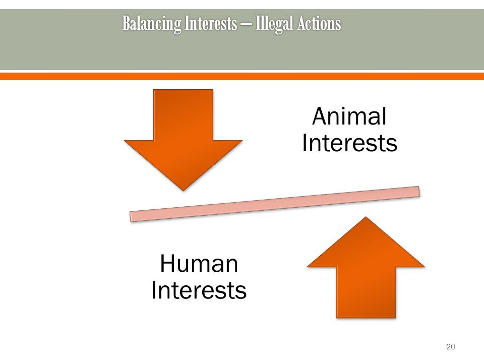Animal Interests Human Interests 20