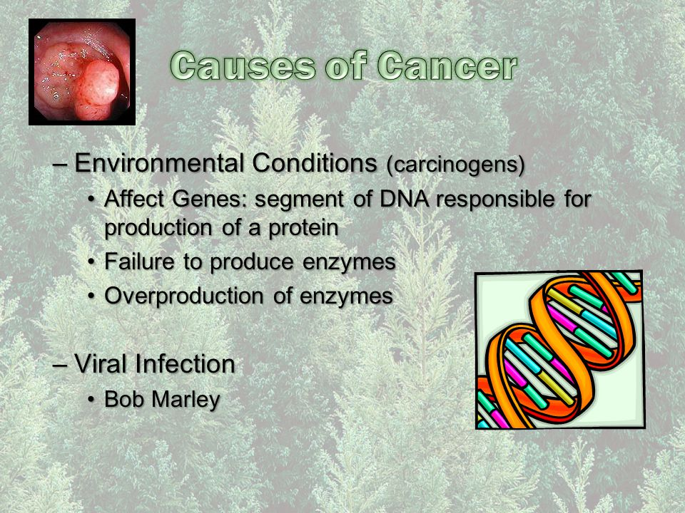 –Environmental Conditions (carcinogens) Affect Genes: segment of DNA responsible for production of a proteinAffect Genes: segment of DNA responsible f