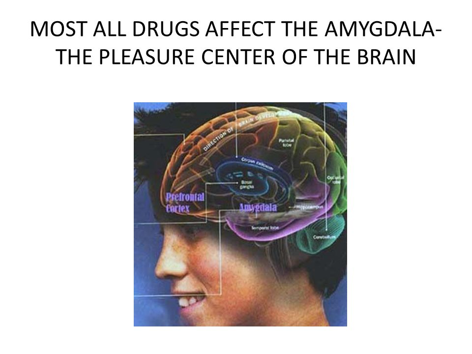 MOST ALL DRUGS AFFECT THE AMYGDALA- THE PLEASURE CENTER OF THE BRAIN