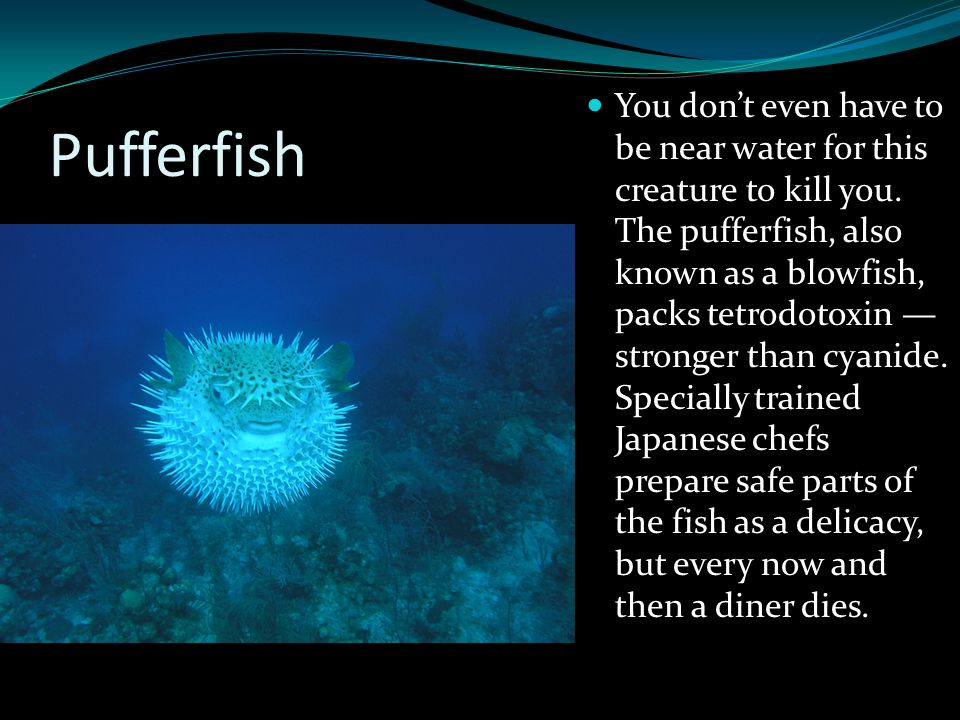 Pufferfish You don't even have to be near water for this creature to kill you. The pufferfish, also known as a blowfish, packs tetrodotoxin — stronger