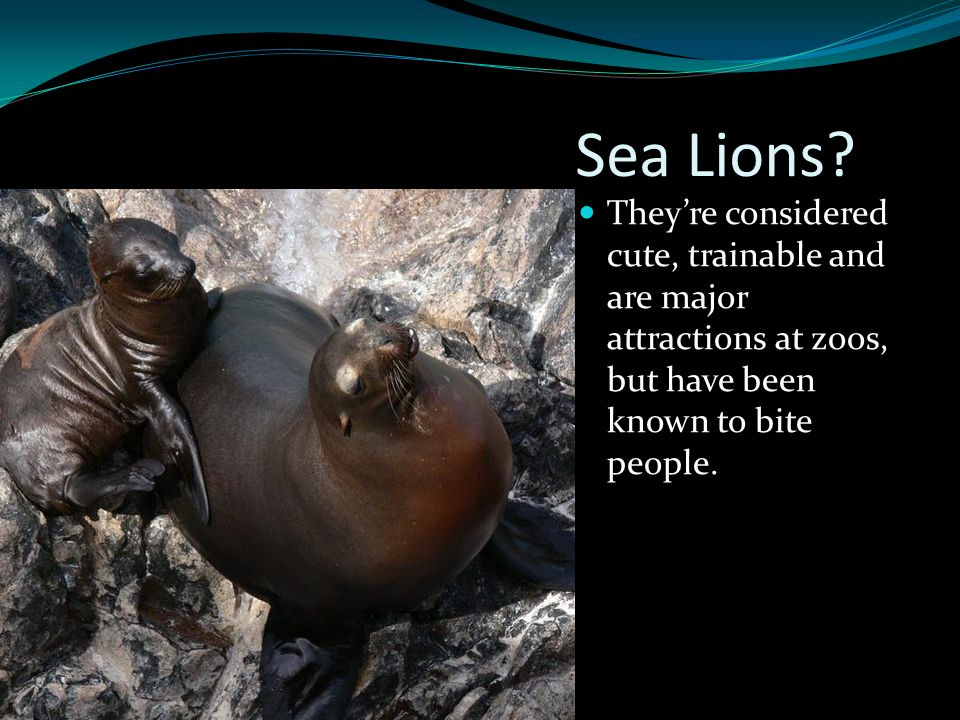 Sea Lions? They're considered cute, trainable and are major attractions at zoos, but have been known to bite people.