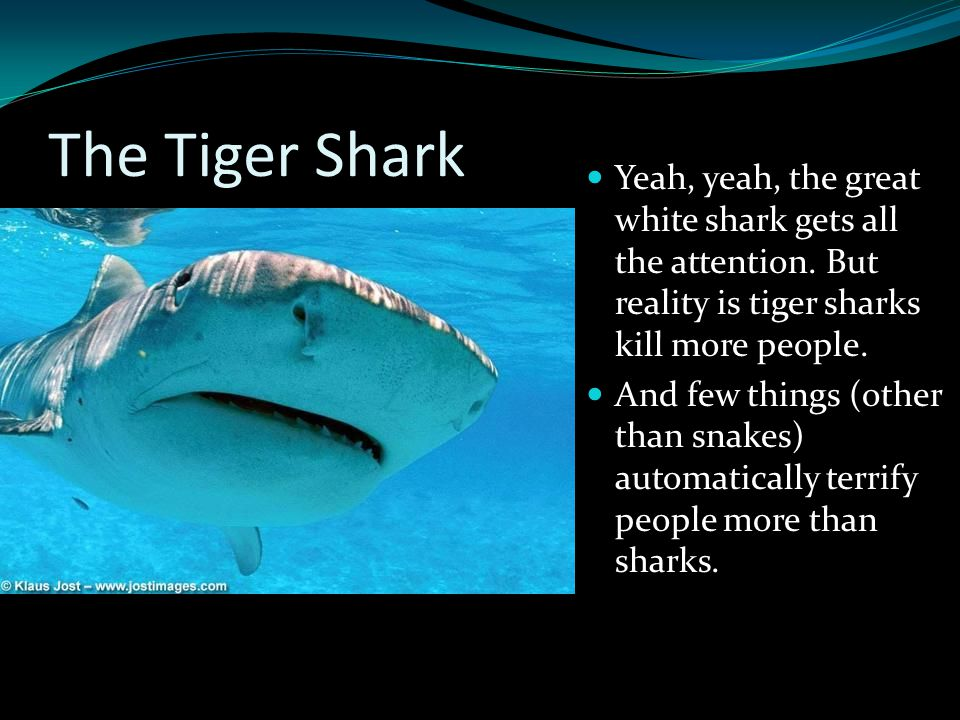 The Tiger Shark Yeah, yeah, the great white shark gets all the attention. But reality is tiger sharks kill more people. And few things (other than sna