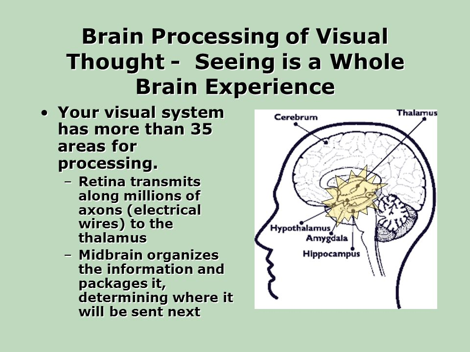 Brain Processing of Visual Thought - Seeing is a Whole Brain Experience Your visual system has more than 35 areas for processing.