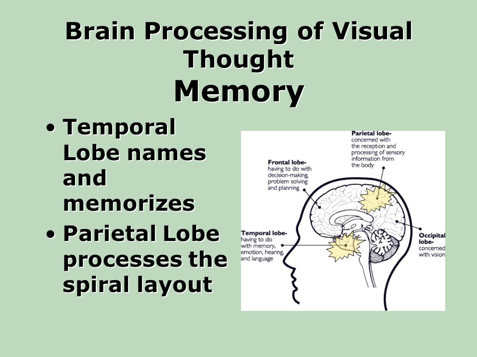 Brain Processing of Visual Thought Memory Temporal Lobe names and memorizes Parietal Lobe processes the spiral layout Temporal Lobe names and memorizes Parietal Lobe processes the spiral layout