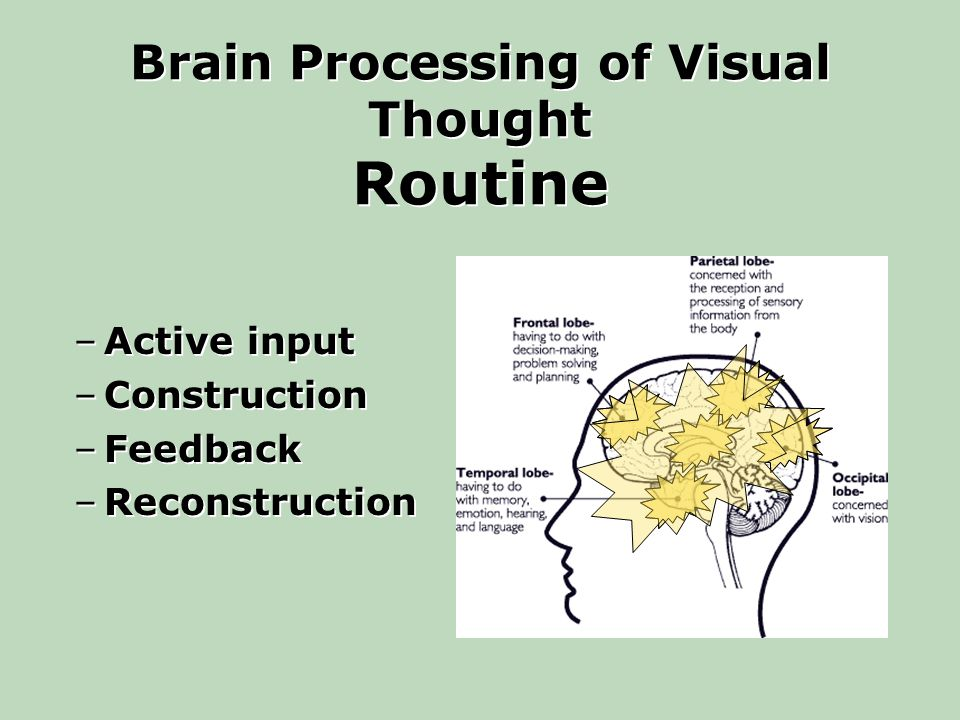 Brain Processing of Visual Thought Routine –Active input –Construction –Feedback –Reconstruction –Active input –Construction –Feedback –Reconstruction