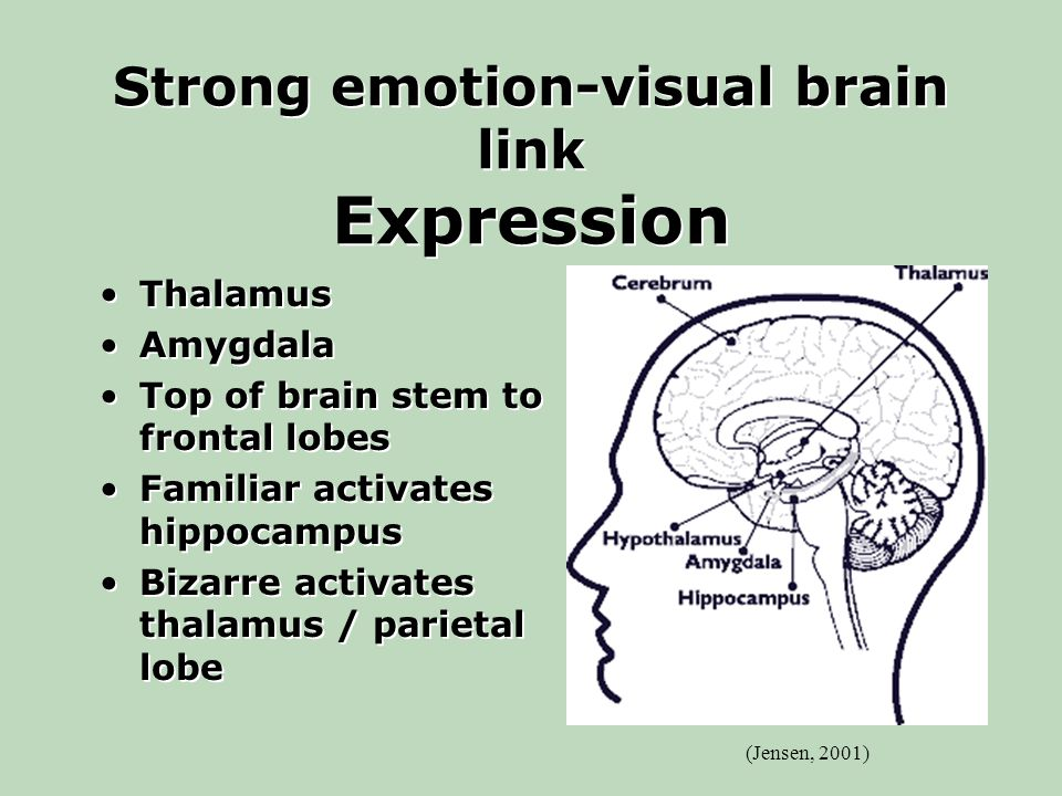 Strong emotion-visual brain link Expression Thalamus Amygdala Top of brain stem to frontal lobes Familiar activates hippocampus Bizarre activates thalamus / parietal lobe Thalamus Amygdala Top of brain stem to frontal lobes Familiar activates hippocampus Bizarre activates thalamus / parietal lobe (Jensen, 2001)