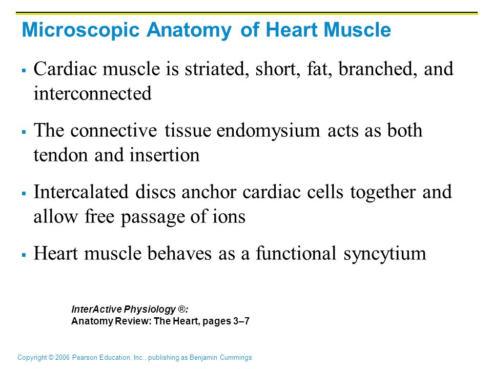 Copyright © 2006 Pearson Education, Inc., publishing as Benjamin Cummings Microscopic Anatomy of Heart Muscle  Cardiac muscle is striated, short, fat, branched, and interconnected  The connective tissue endomysium acts as both tendon and insertion  Intercalated discs anchor cardiac cells together and allow free passage of ions  Heart muscle behaves as a functional syncytium InterActive Physiology ®: Anatomy Review: The Heart, pages 3–7
