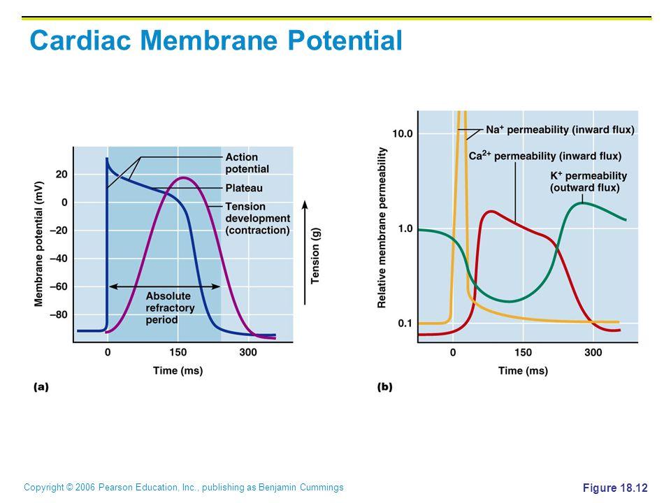 Copyright © 2006 Pearson Education, Inc., publishing as Benjamin Cummings Cardiac Membrane Potential Figure 18.12