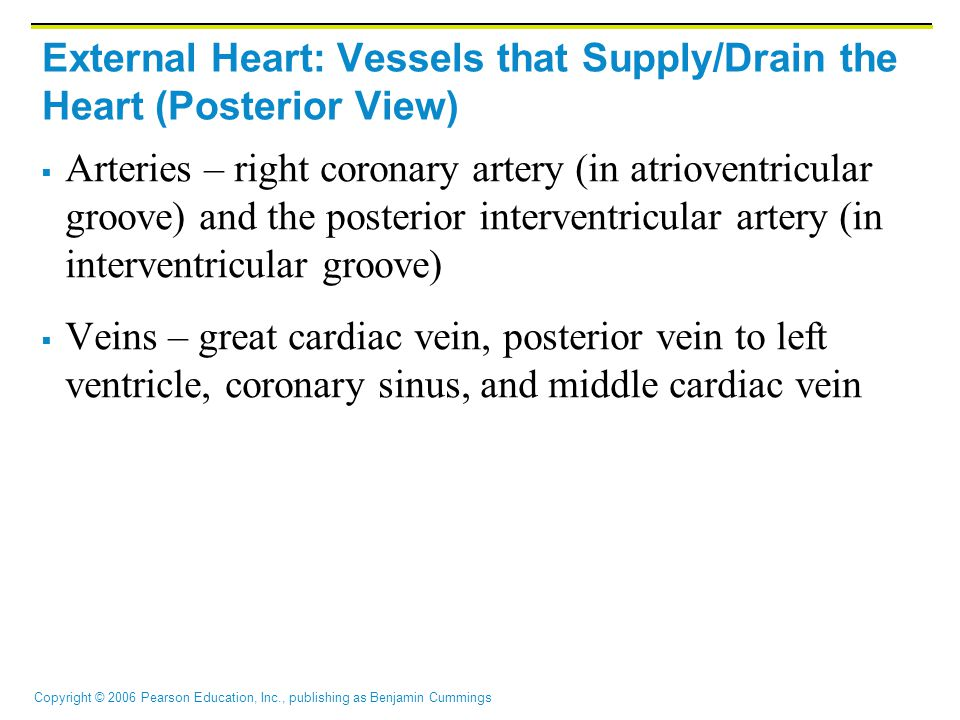 Copyright © 2006 Pearson Education, Inc., publishing as Benjamin Cummings External Heart: Vessels that Supply/Drain the Heart (Posterior View)  Arteries – right coronary artery (in atrioventricular groove) and the posterior interventricular artery (in interventricular groove)  Veins – great cardiac vein, posterior vein to left ventricle, coronary sinus, and middle cardiac vein