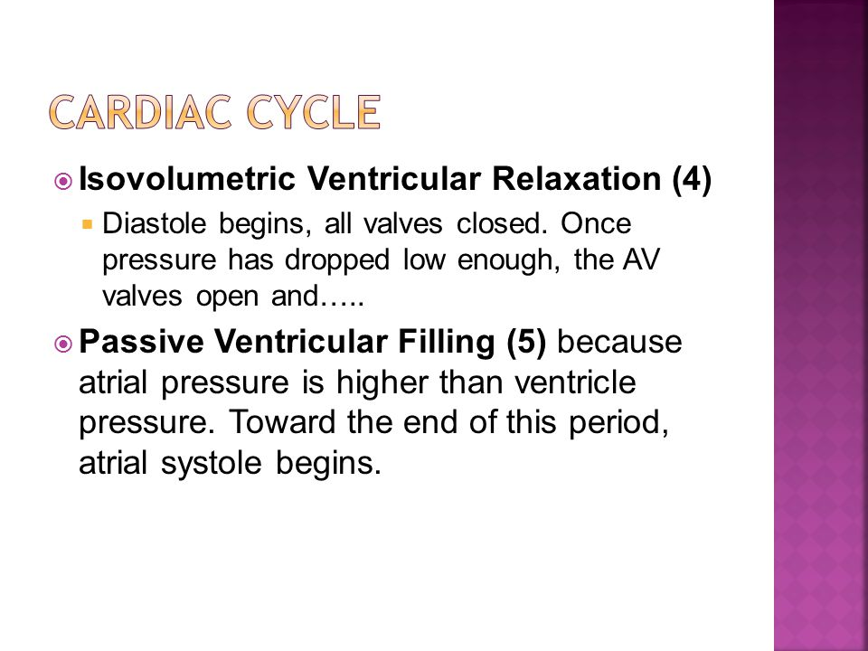  Isovolumetric Ventricular Relaxation (4)  Diastole begins, all valves closed.