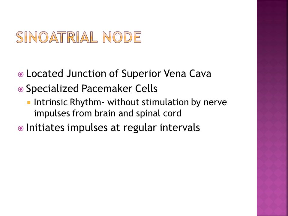  Located Junction of Superior Vena Cava  Specialized Pacemaker Cells  Intrinsic Rhythm- without stimulation by nerve impulses from brain and spinal cord  Initiates impulses at regular intervals