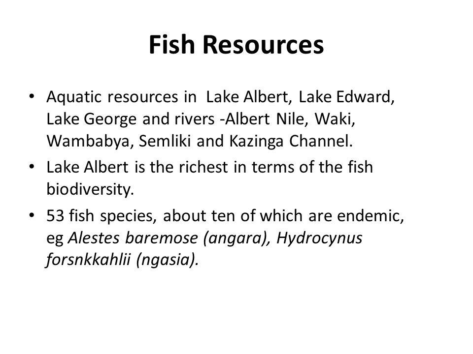 Fish Resources Aquatic resources in Lake Albert, Lake Edward, Lake George and rivers -Albert Nile, Waki, Wambabya, Semliki and Kazinga Channel. Lake A