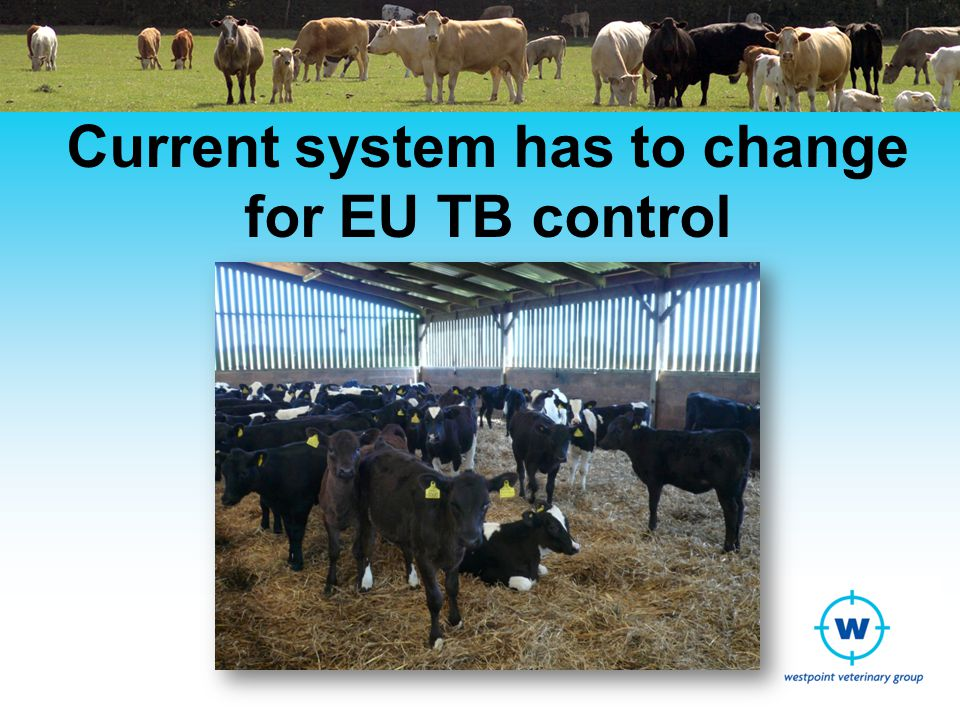 DEFRA changes TBIN 05-12 TB information note on DEFRA website http://www.defra.gov.uk/animal- diseases/files/tb-infonote-1205-changes- to-movements.pdfhttp://www.defra.gov.uk/animal- diseases/files/tb-infonote-1205-changes- to-movements.pdf Removal of AQUs Implementation of new Feeder AFUs Restocking and other testing guidance Changes in AFU testing requirements