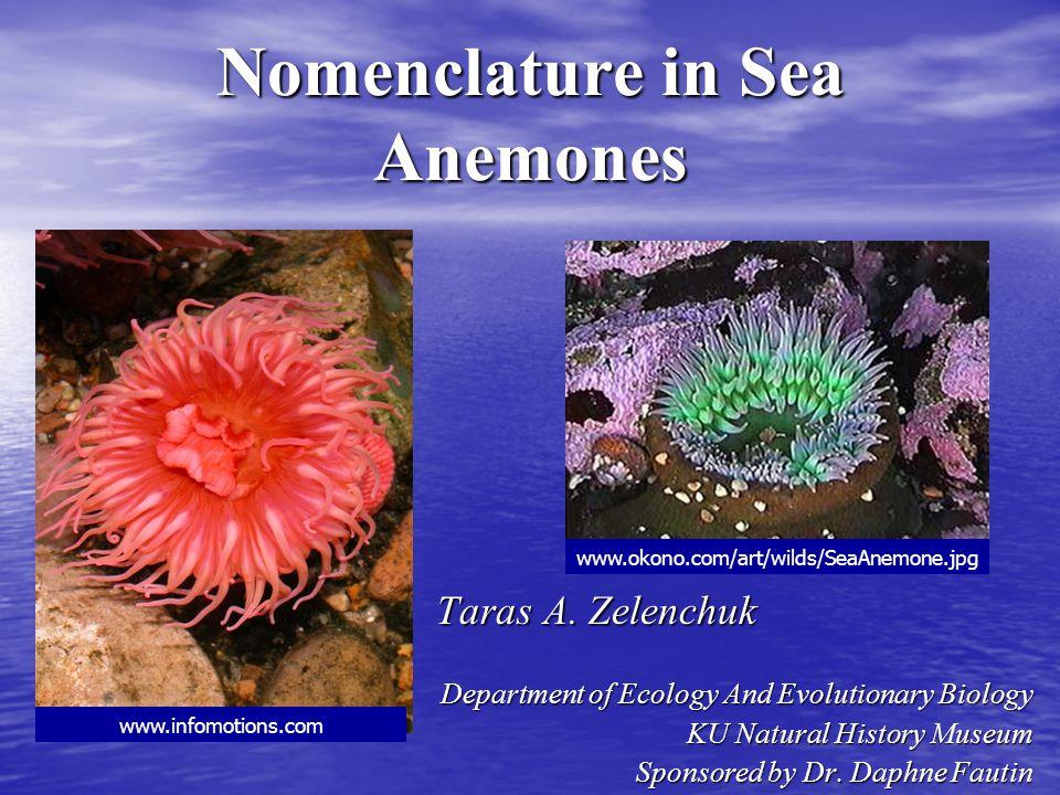Nomenclature in Sea Anemones Taras A. Zelenchuk Taras A. Zelenchuk Department of Ecology And Evolutionary Biology KU Natural History Museum Sponsored