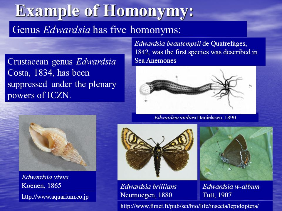 Example of Homonymy: Genus Edwardsia has five homonyms: Edwardsia andresi Danielssen, 1890 Crustacean genus Edwardsia Costa, 1834, has been suppressed under the plenary powers of ICZN.
