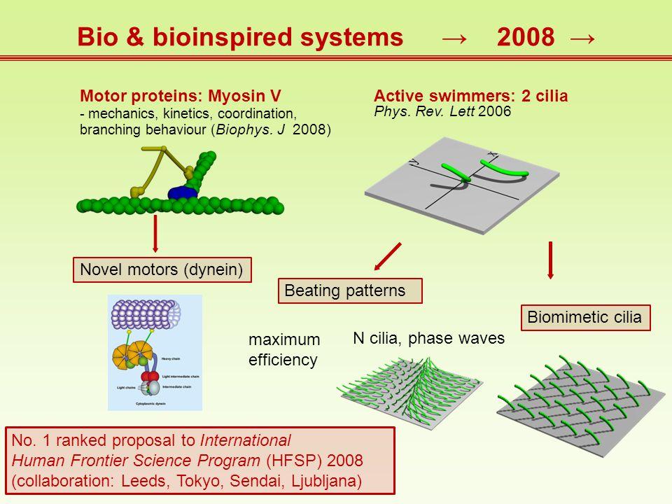 Motor proteins: Myosin V - mechanics, kinetics, coordination, branching behaviour ( Biophys.
