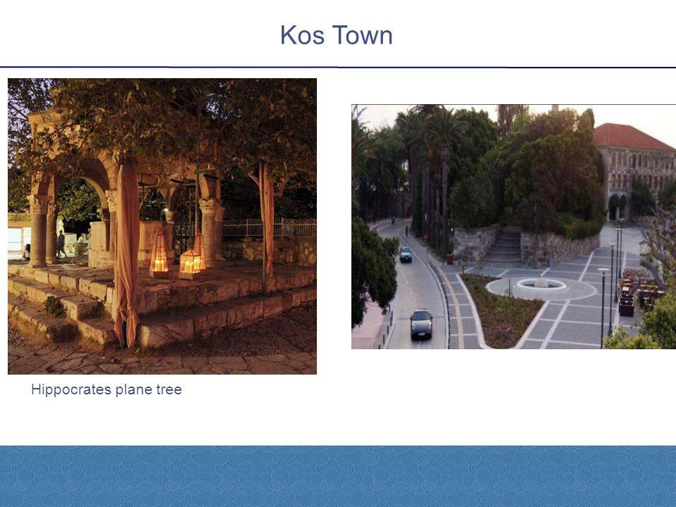 Hippocrates plane tree Kos Town