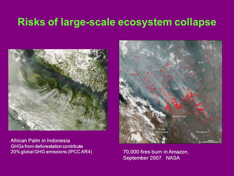 Risks of large-scale ecosystem collapse African Palm in Indonesia GHGs from deforestation contribute 20% global GHG emissions (IPCC AR4) 70,000 fires burn in Amazon, September 2007.