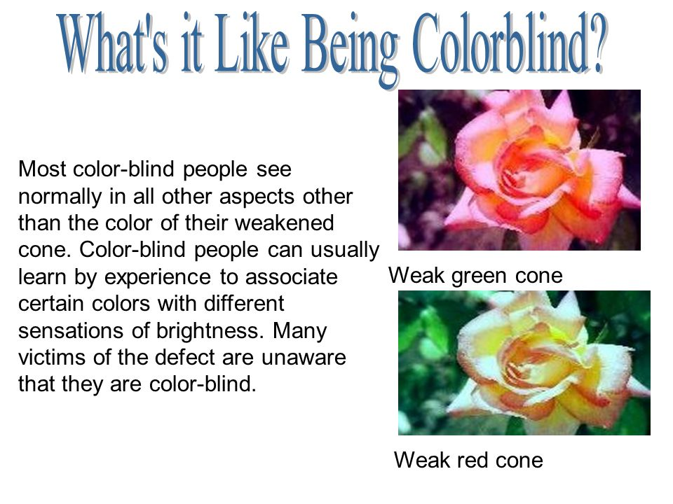 Most color-blind people see normally in all other aspects other than the color of their weakened cone. Color-blind people can usually learn by experie