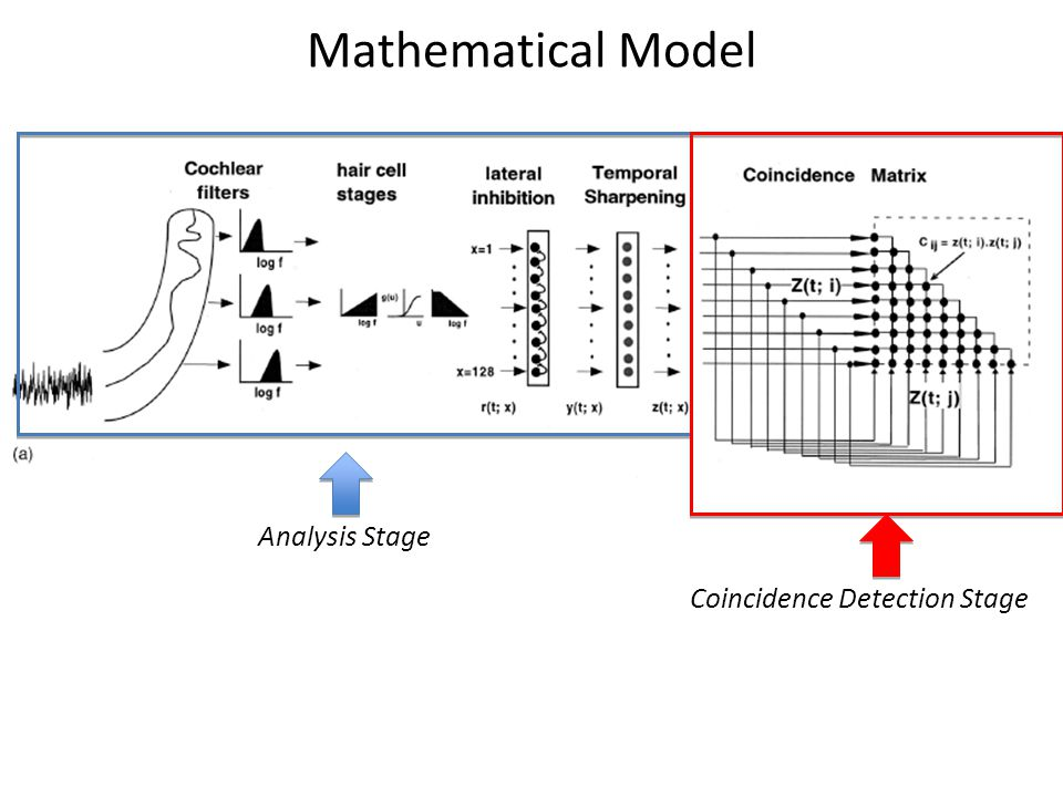 Mathematical Model Analysis Stage Coincidence Detection Stage
