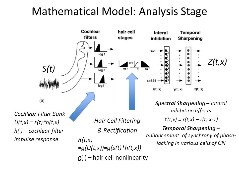 Mathematical Model: Analysis Stage Cochlear Filter Bank U(t,x) = s(t)*h(t,x) h( ) – cochlear filter impulse response Hair Cell Filtering & Rectification R(t,x) =g(U(t,x))=g(s(t)*h(t,x)) g( ) – hair cell nonlinearity S(t) Spectral Sharpening – lateral inhibition effects Y(t,x) = r(t,x) – r(t, x-1) Temporal Sharpening – enhancement of synchrony of phase- locking in various cells of CN Z(t,x)