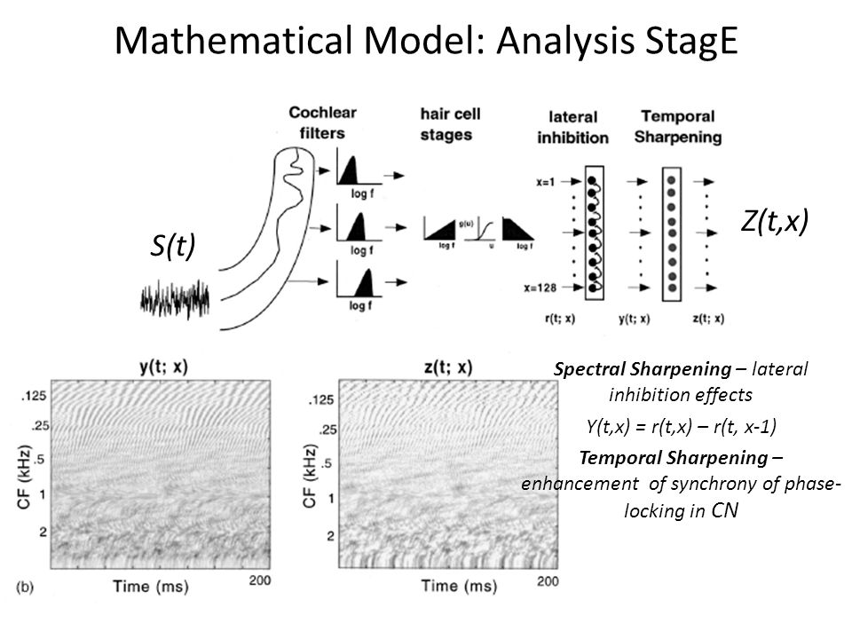 Mathematical Model: Analysis StagE S(t) Z(t,x) Spectral Sharpening – lateral inhibition effects Y(t,x) = r(t,x) – r(t, x-1) Temporal Sharpening – enhancement of synchrony of phase- locking in CN