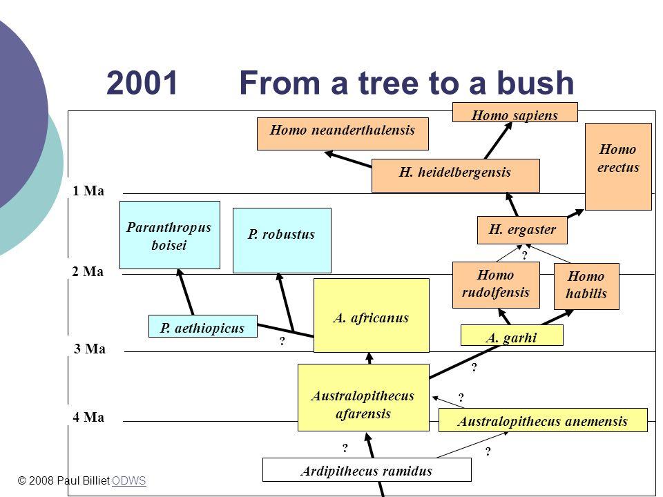 2001 From a tree to a bush . 1 Ma 2 Ma 3 Ma 4 Ma Homo sapiens Homo erectus Homo habilis A.