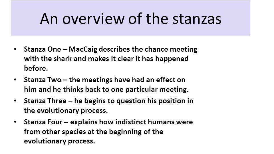 An overview of the stanzas Stanza One – MacCaig describes the chance meeting with the shark and makes it clear it has happened before.