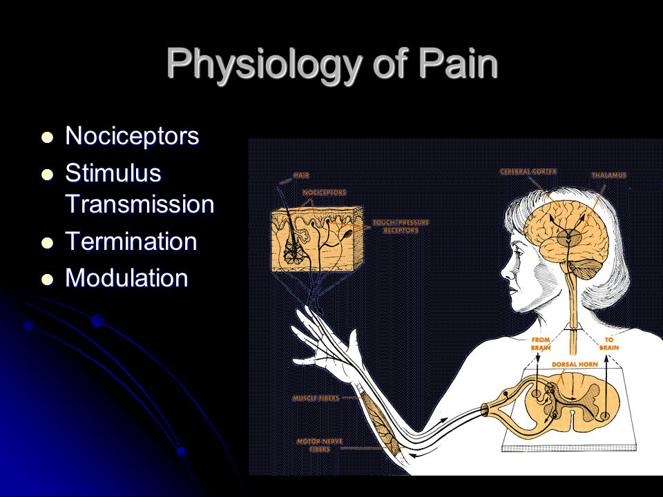 Physiology of Pain Nociceptors Nociceptors Stimulus Transmission Stimulus Transmission Termination Termination Modulation Modulation