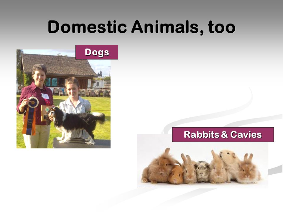 Domestic Animals, too Dogs Rabbits & Cavies