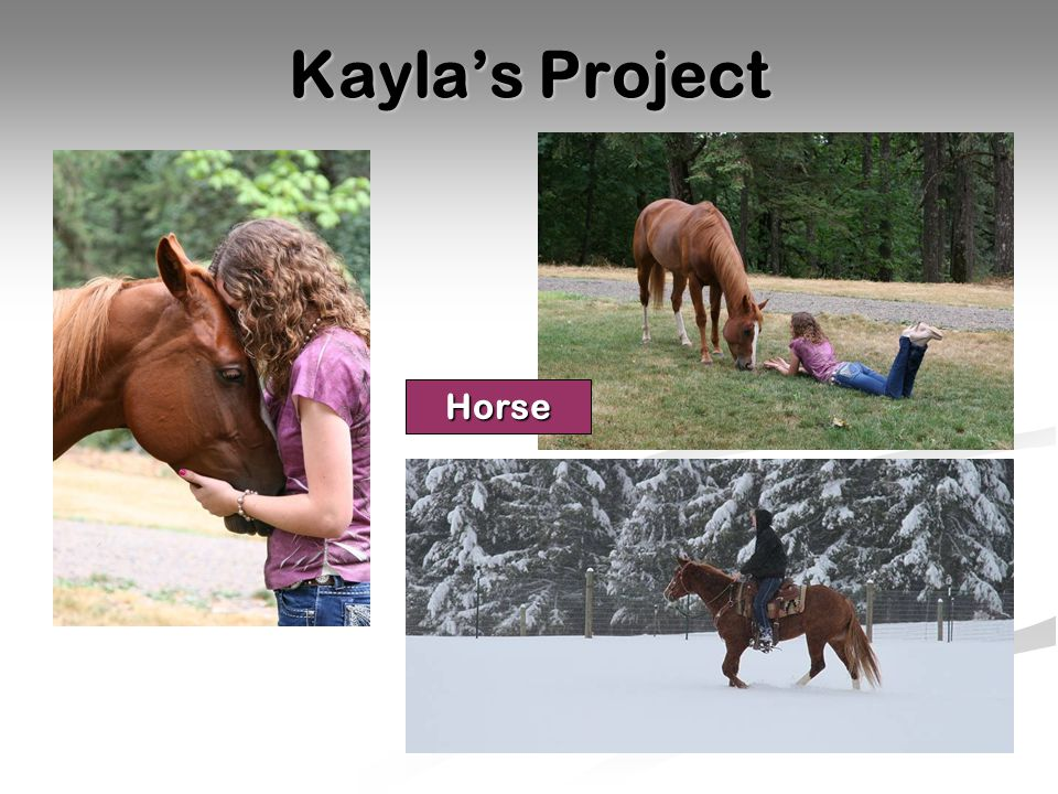 Kayla's Project Horse