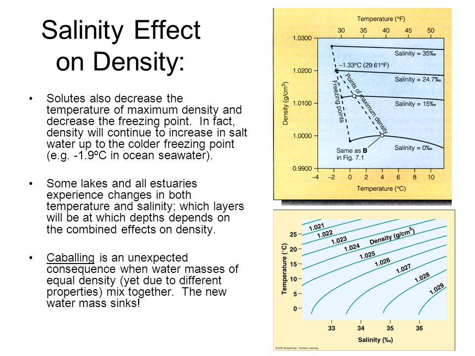Salinity Effect on Density: Solutes also decrease the temperature of maximum density and decrease the freezing point.