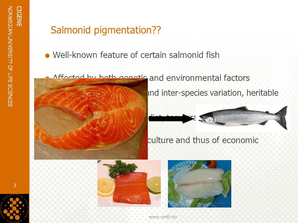www.umb.no NORWEGIAN UNIVERSITY OF LIFE SCIENCES CIGENE 3 Salmonid pigmentation .