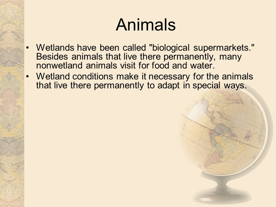 Animals Wetlands have been called biological supermarkets. Besides animals that live there permanently, many nonwetland animals visit for food and water.