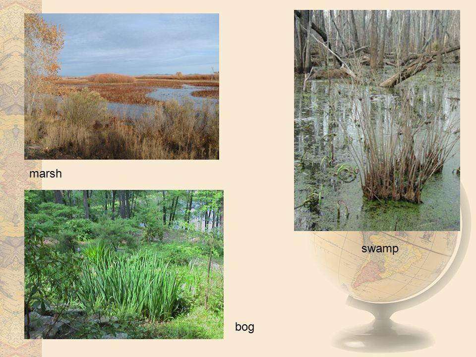 marsh swamp bog