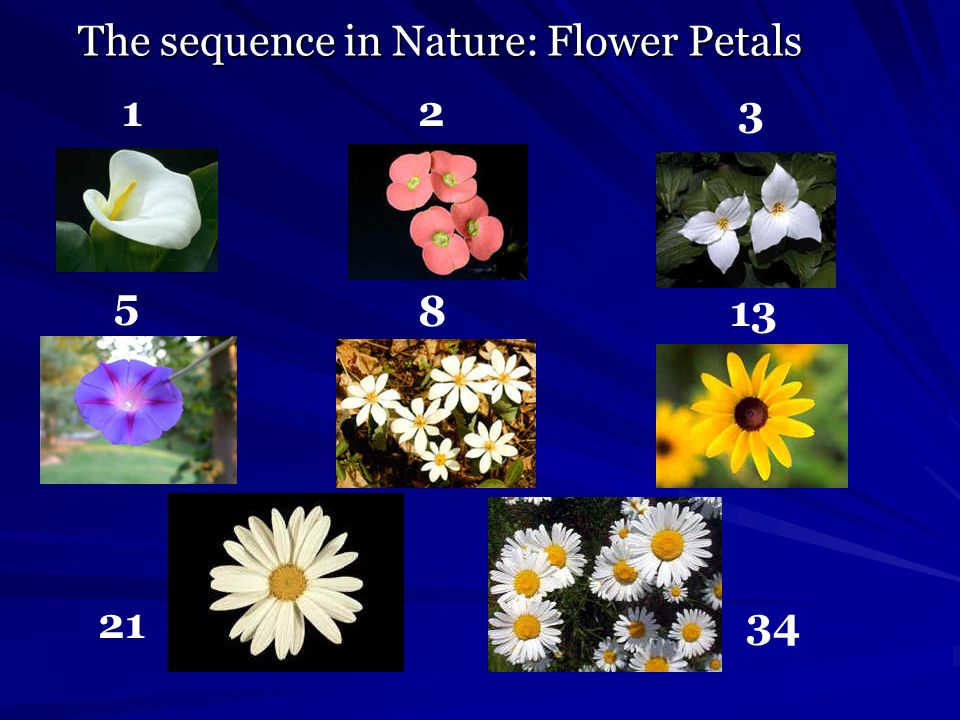 The sequence in Nature: Flower Petals 123 5 813 2134