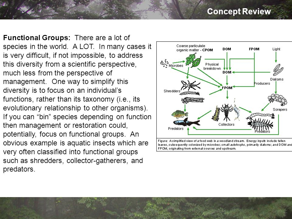Concept Review Functional Groups: There are a lot of species in the world.
